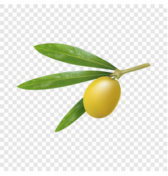 green greek olive icon realistic style vector image