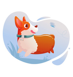 Happy cute dog corgi running on grass in a park vector