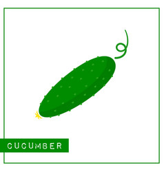 isolated green cucumber memory training card vector image