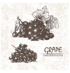 digital detailed grape hand drawn vector image