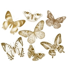 Set of butterflies Insect vintage vector image