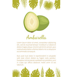 ambarella exotic juicy fruit poster text vector image