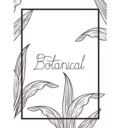 Botanical label with plants isolated icon vector