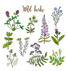 Wild herbs set vector