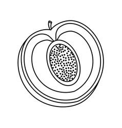 Delicious peach fruit vector