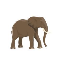Elephant african safari zoo and hunt wild animal vector