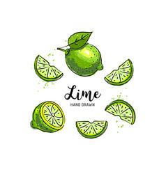 Lime fruit drawing half and slice lemon vector