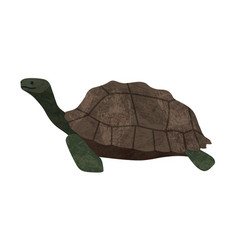 marune turtle animal icon vector image