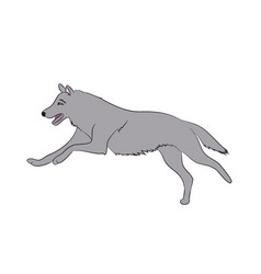 Wolf runs image color vector
