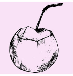 green coconuts vector image vector image
