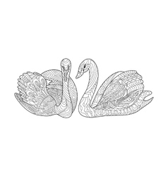 Swans coloring book for adults vector image vector image
