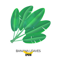 banana leaves icon vector image