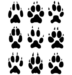 footprints foxes vector image