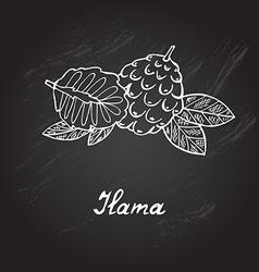 Hand drawn ilama vector