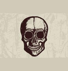 new skull -grunge - 2019 vector image