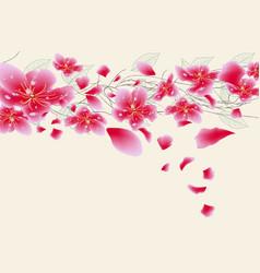 sakura flowers background cherry blossom isolated vector image