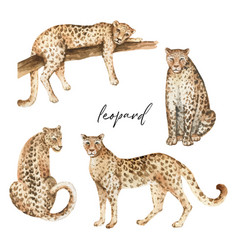 watercolor set with leopard and green vector image