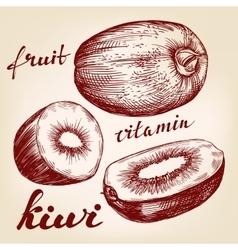 fruit kiwi set hand drawn llustration vector image vector image