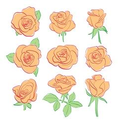 orange red roses - set vector image