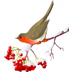 winter bird vector image