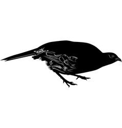 bird pheasant isolated on white background vector image