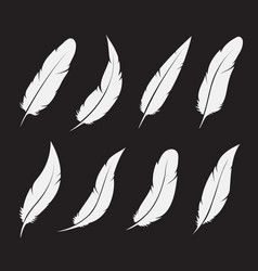group white feather on white background easy vector image