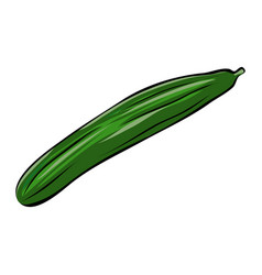 hand drawn green cucumber vector image