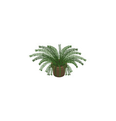 isolated fern isometric plant element can vector image