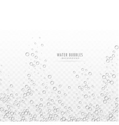 Transparent water bubbles on white background vector