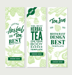 sketch healthy tea vertical banners vector image