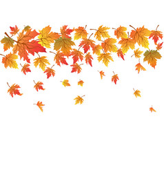 maples background with copy space vector image
