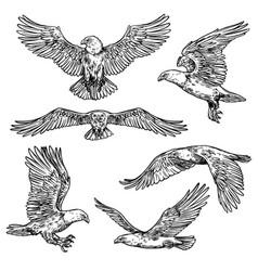 Hawk or eagle sketch flying falcon vector