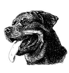 Rottweiler 10 vector