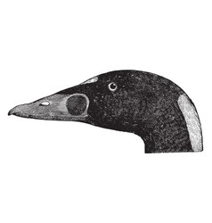 trowbridge surf duck vintage vector image