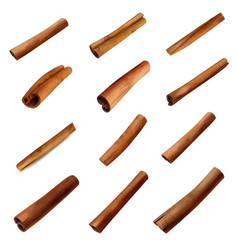 cinnamon sticks set vector image