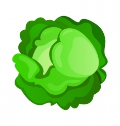 Cabbage vector image