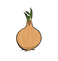 hand drawn onion icon vector image
