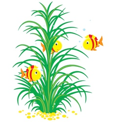 Striped tropical fishes and seaweed vector