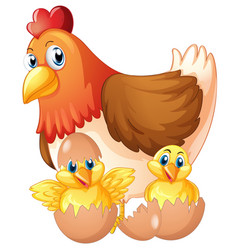 mother hen and two chicks in eggs vector image