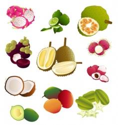 thai fruits vector image vector image