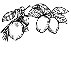 lemon branch vector image