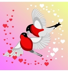 Bullfinch Birds kissing vector image