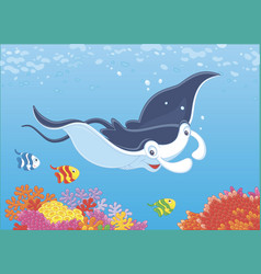 Manta ray over a reef vector