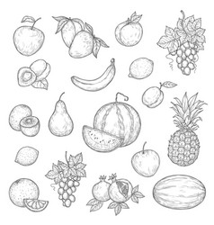 Ntaural ripe fruits skethes vector
