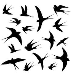Swallows circling vector