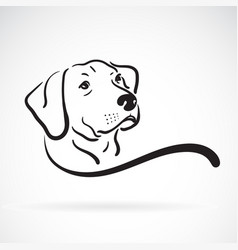 labrador dog head design on white background vector image