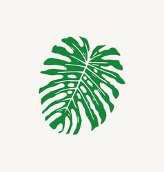 monstera tropical leaf outline vector image