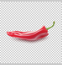Red realistic pepper vector