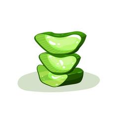 Three green pieces of aloe vera natural vector