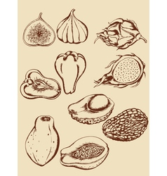 vintage hand drawn tropical fruits vector image vector image
